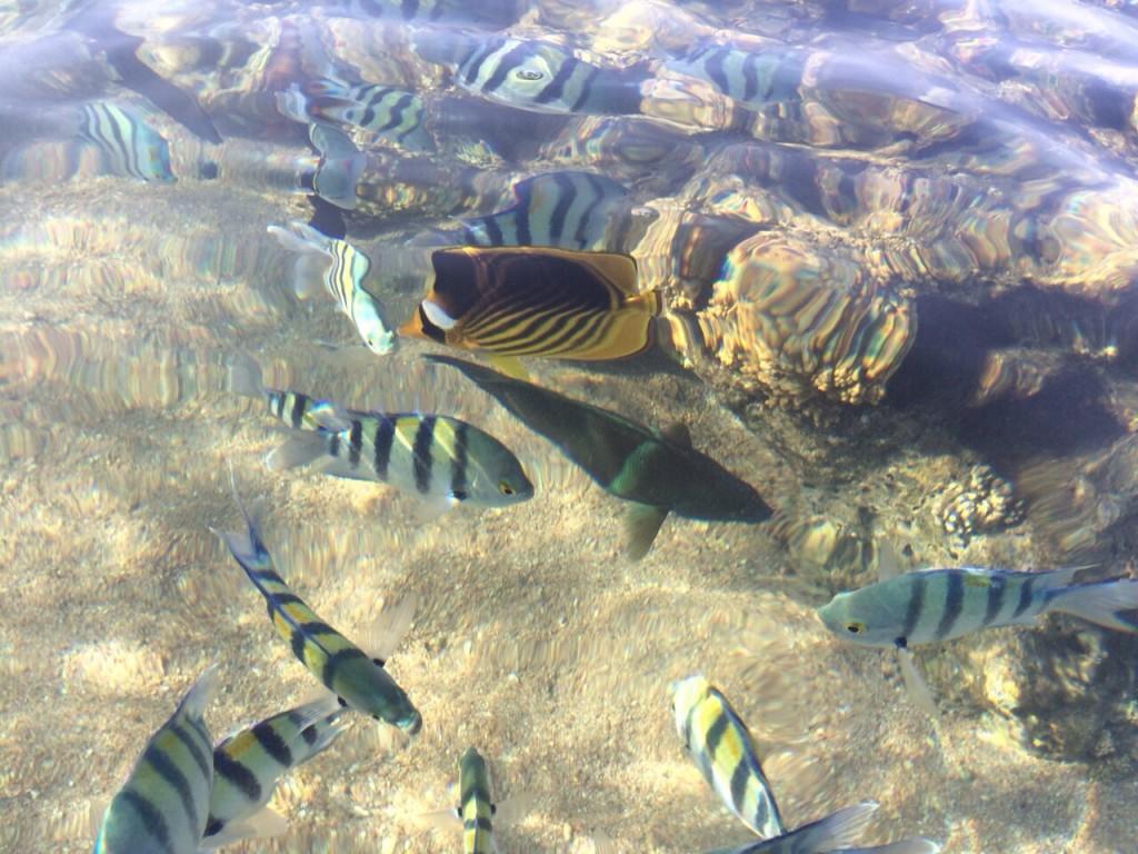 Une myriade de poissons