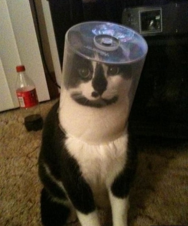 Un chat pris au piège.