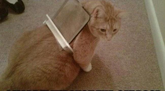 Un chat bloqué