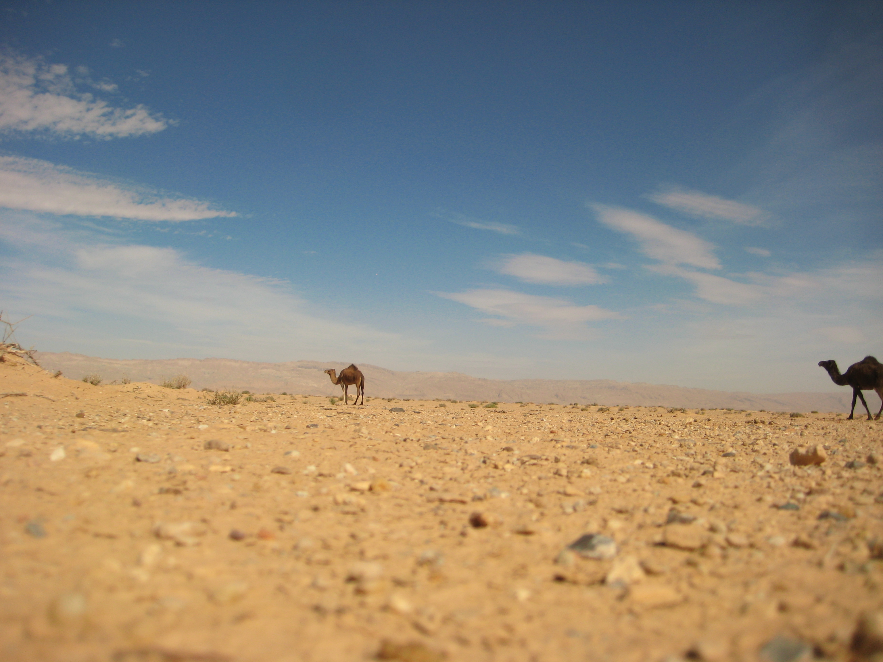 Aux portes du désert tunisien