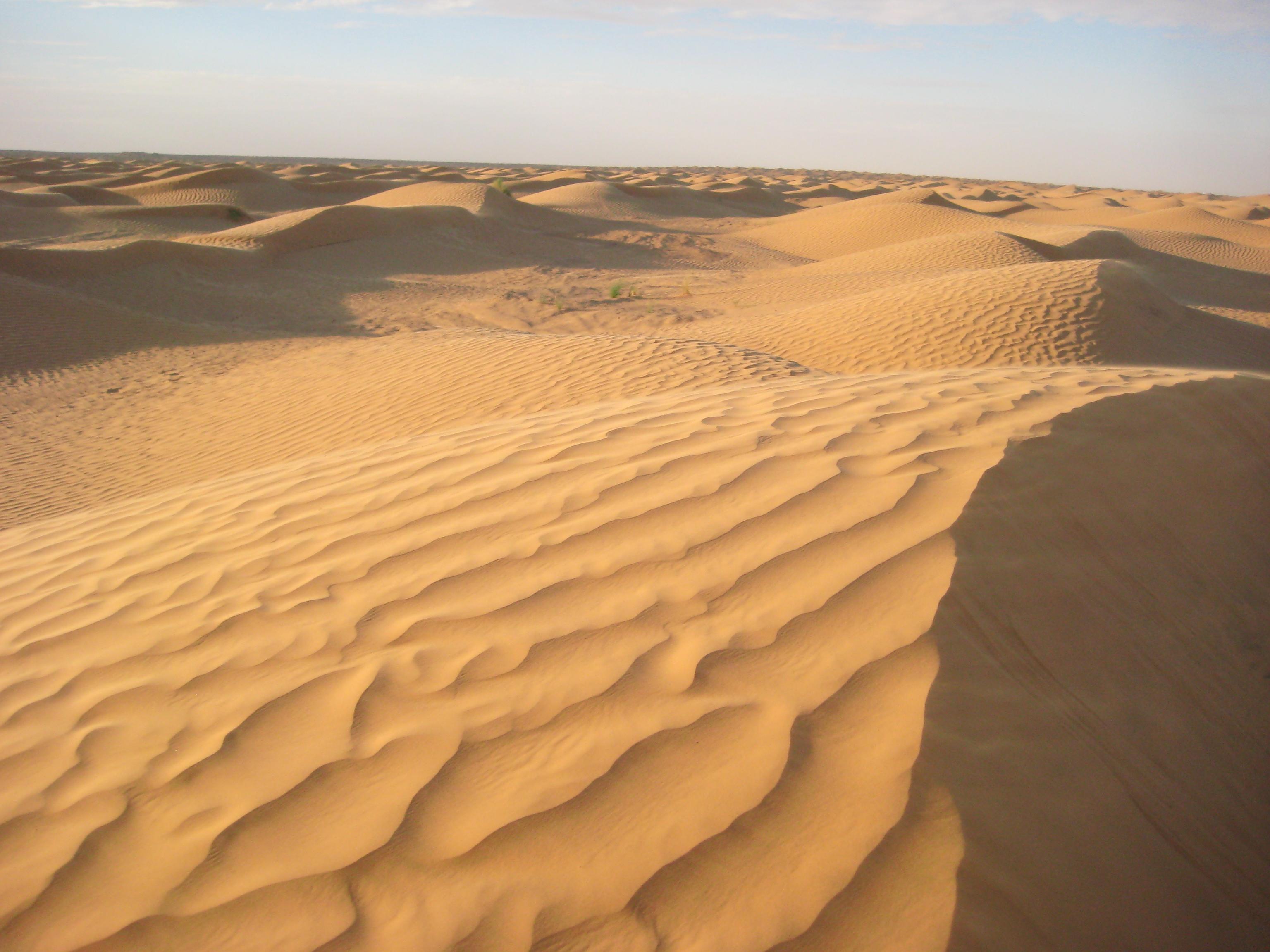 Les dunes de sable du Sahara à perte de vue