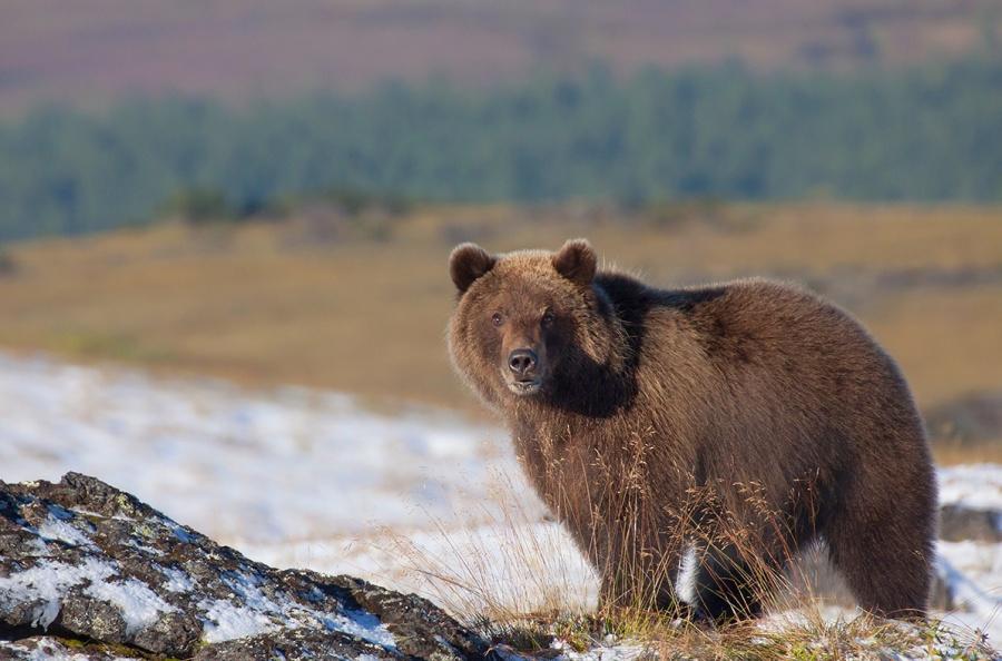 Les ballades sympas au Kamtchatka on oublie