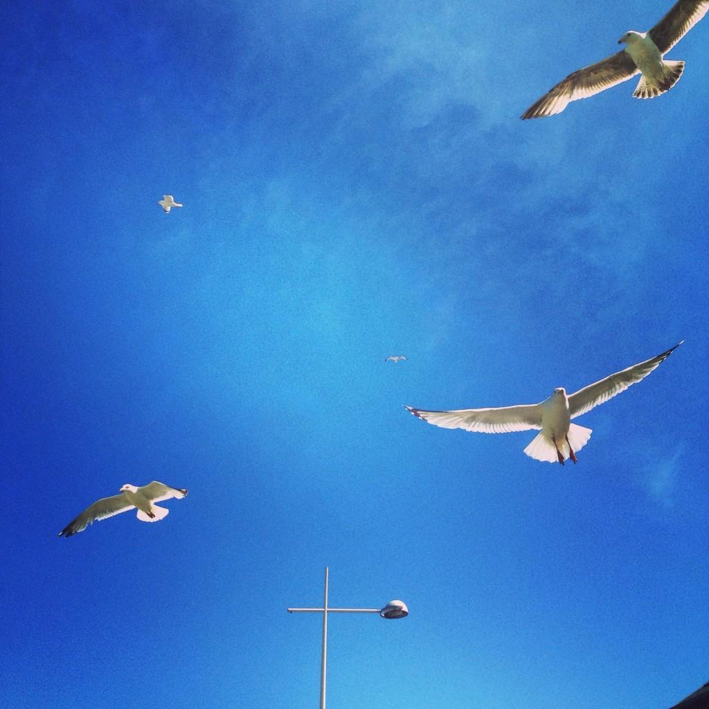 Au port les goélands sont de bruyants voisins