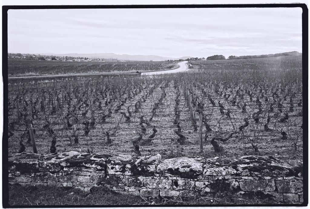 Des vignes à perte de vue sur les belles routes de Bourgogne