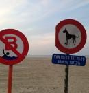 Les photos de plage les plus insolites