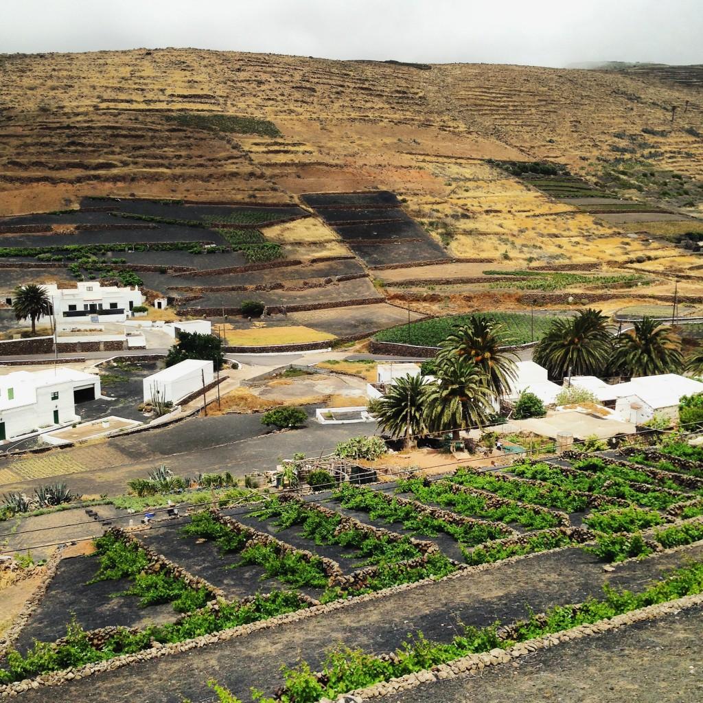 Agriculture à Lanzarote