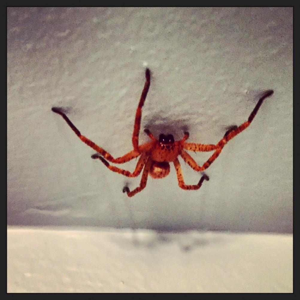Les araign es les plus dangereuses et les plus venimeuses du monde escale de nuit - Araignee rouge dangereux pour l homme ...
