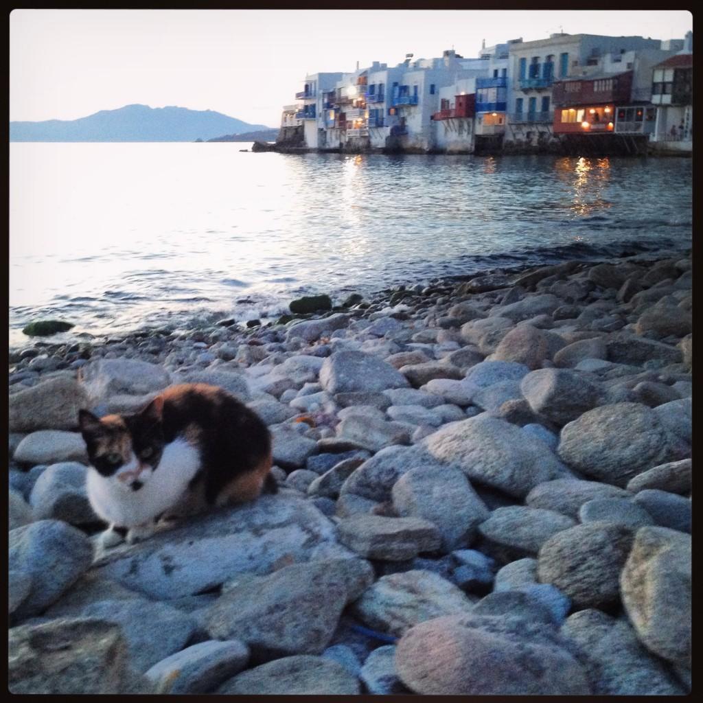 Un chat au crépuscule sur l'île de Mykonos