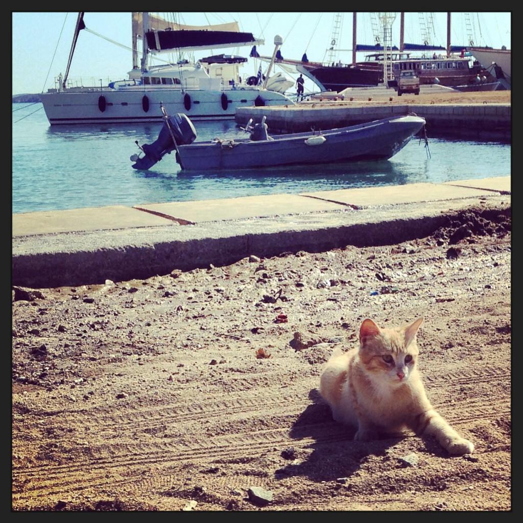 Un petit chat sous le soleil de Mykonos