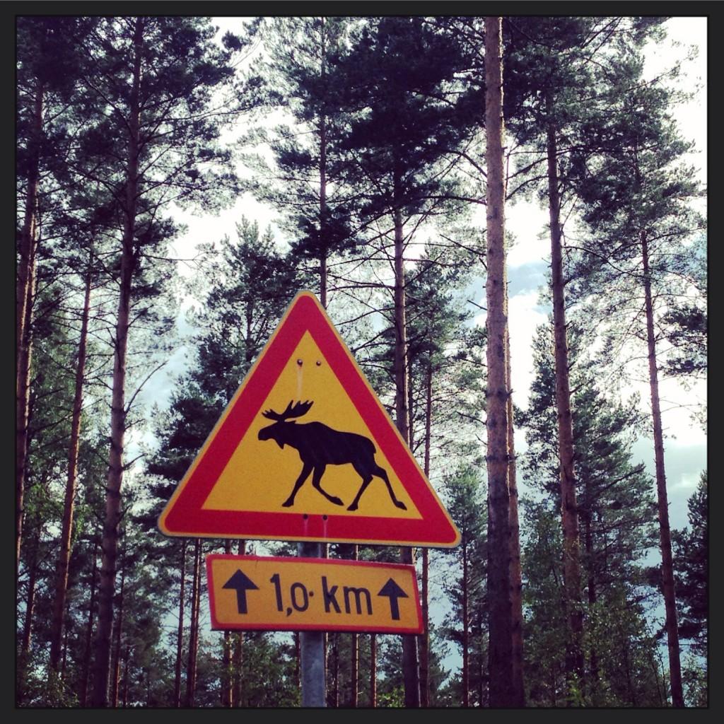 9. Attention aux Élans sur 1 km