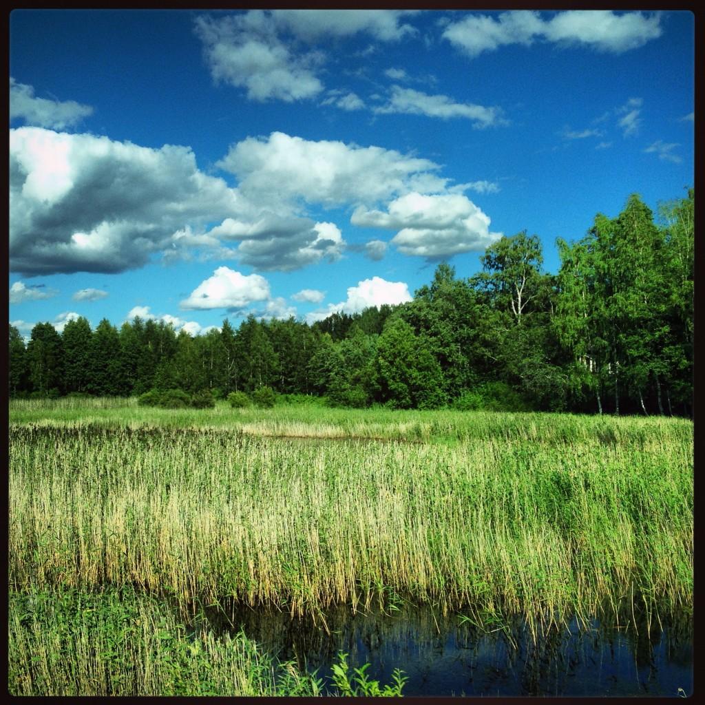 Les marais finlandais entre Joensuu et Imatra