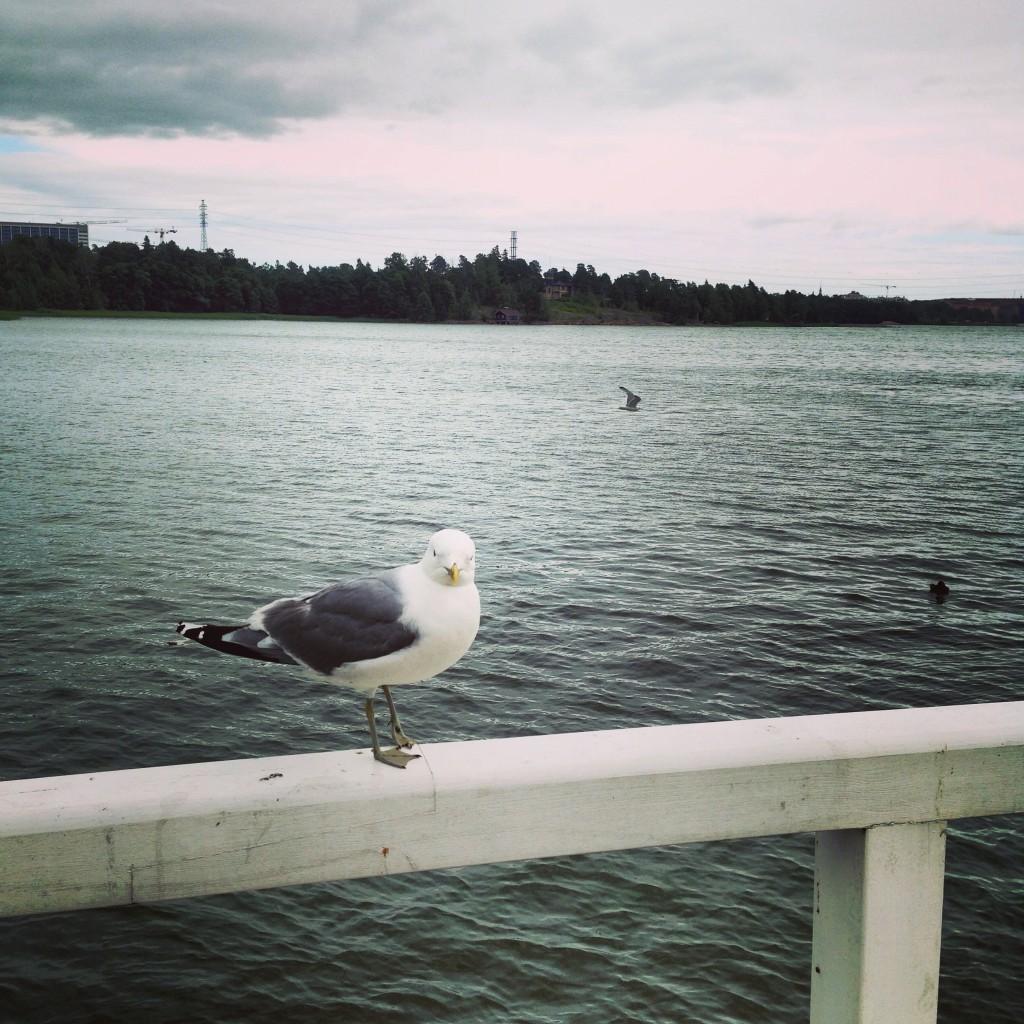 25. Une mouette se repose à Helsinki