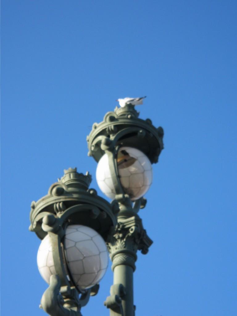 Des globes de l'éclairage publique de Saint-Petersbourg