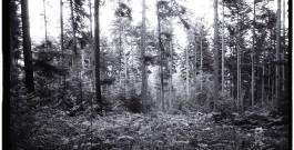 Les plus grandes forêts du monde