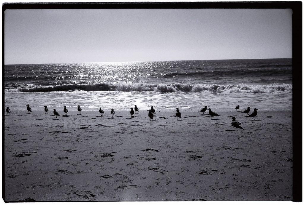 Les mouettes attendent le retour des pêcheurs