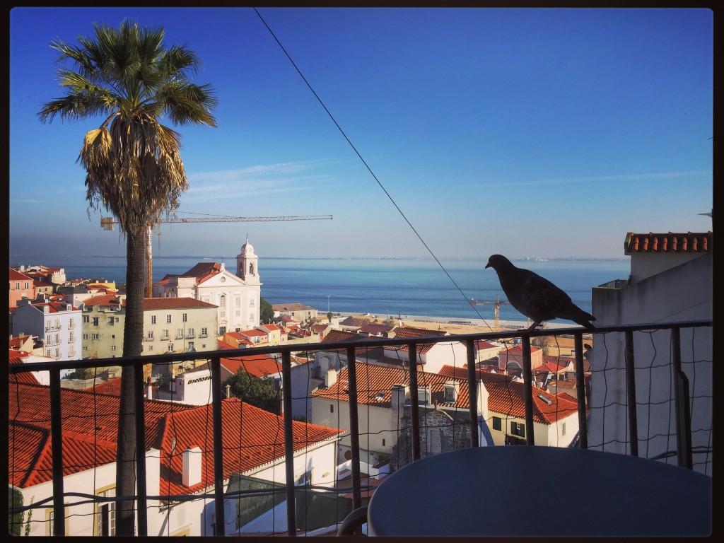 Un pigeon qui admire le panorama depuis le mirador de Santa Luzia