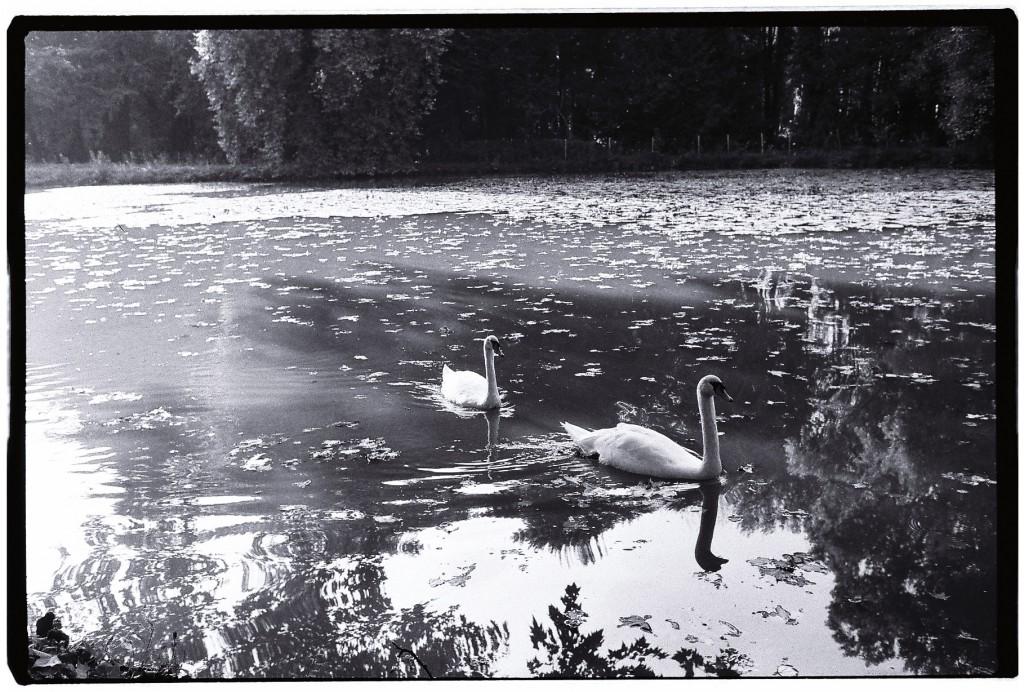 Un lac à proximité du château de Cheverny