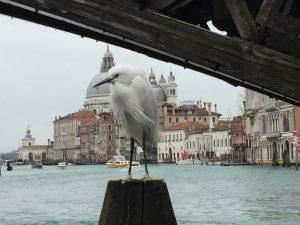Venise une ville vraiment insolite