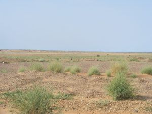 Les grandes étendues dans la région d'Arlit au Niger