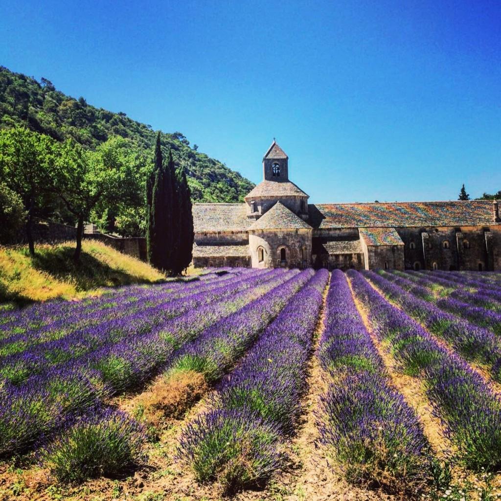 L'abbaye de Sénanque à Gordes
