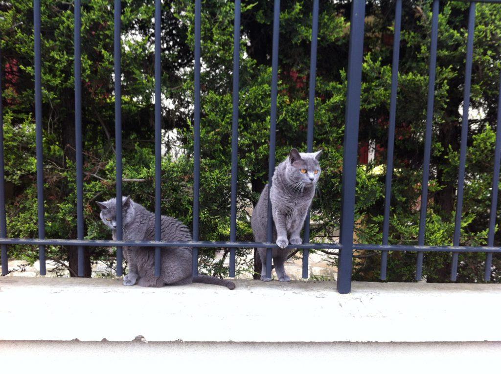 Des chats nonchalants à Rome