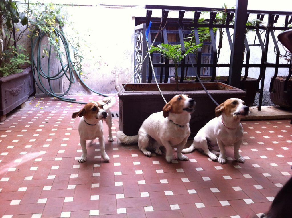 27. Trois petits chiens au petit dejeuner de l'hôtel à Rome