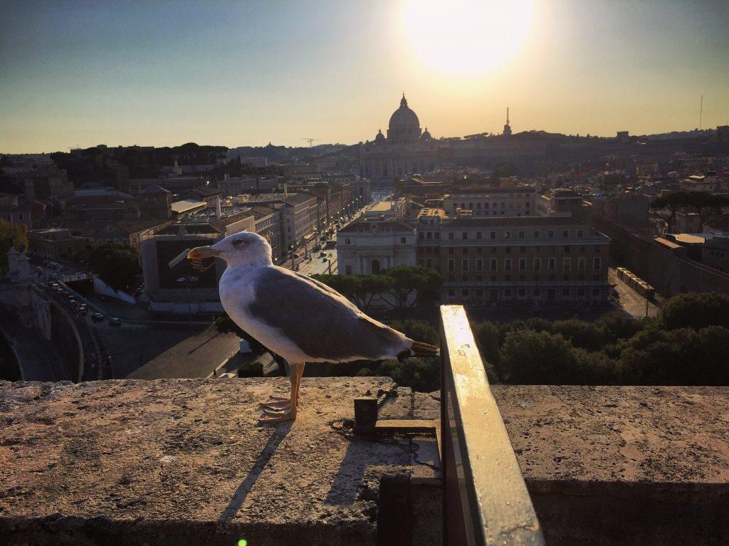 51. Une mouette qui a élu domicile à Rome