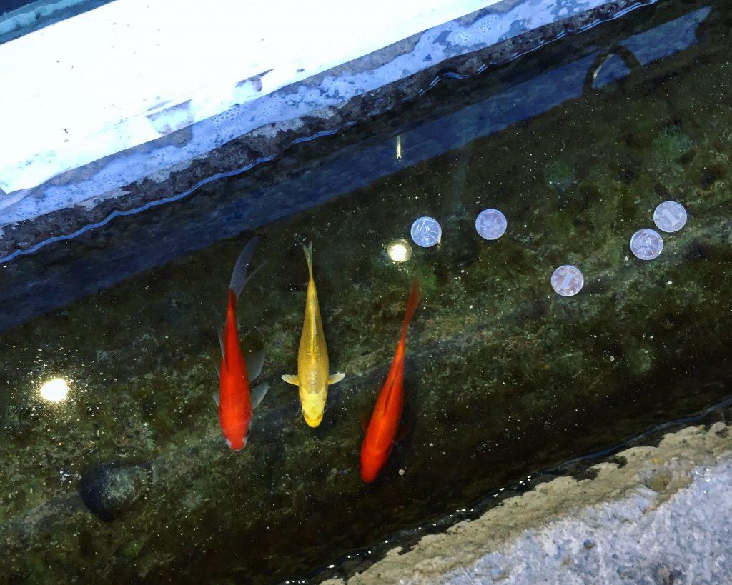 Trois petits poissons dans un aquarium improvisé à Pékin