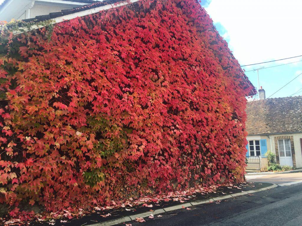 Couleurs d'automne dans le Loiret en octobre 2016