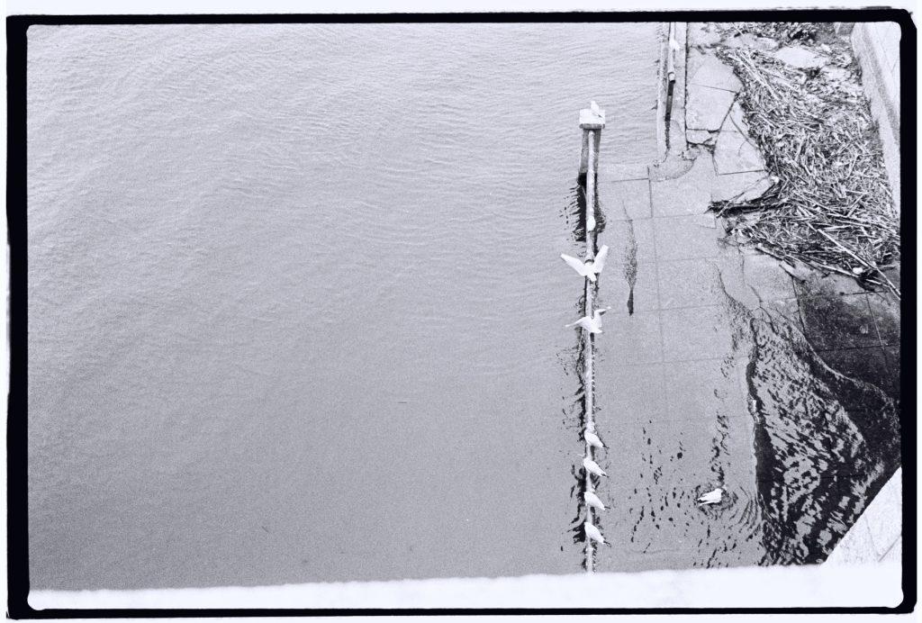 Les bords de Saône à Lyon
