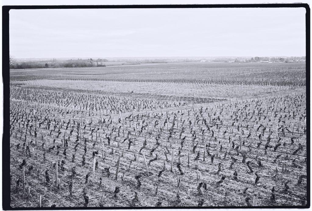 Des vignes à perte de vue en Bourgogne