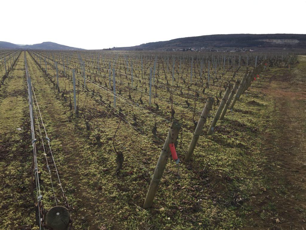 la vigne en Bourgogne