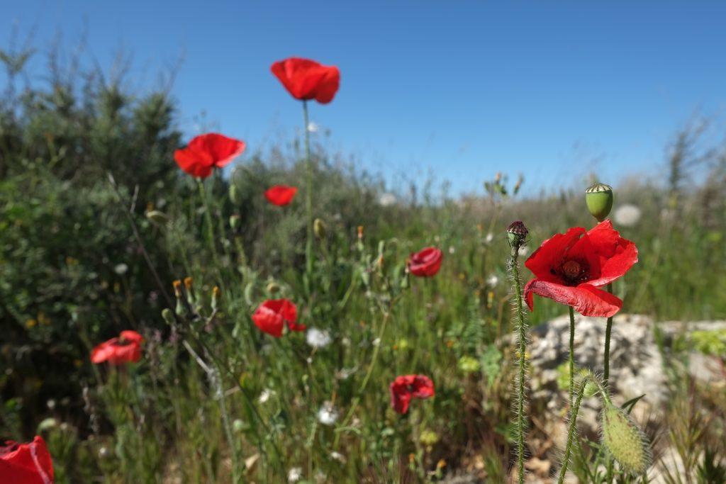 Derrière ces quelques fleurs le parc naturel Las Bardenas Reales