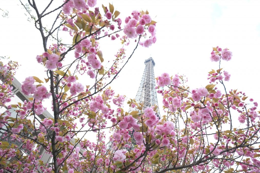 La tour Eiffel, le printemps adoucit les moeurs