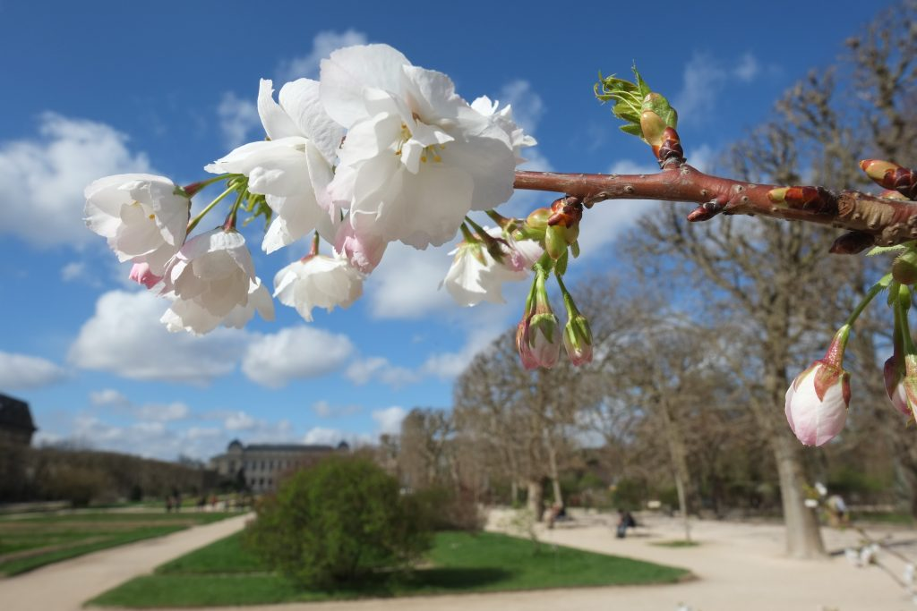 Le parc floral dans le 5 ème arrondissement à Paris