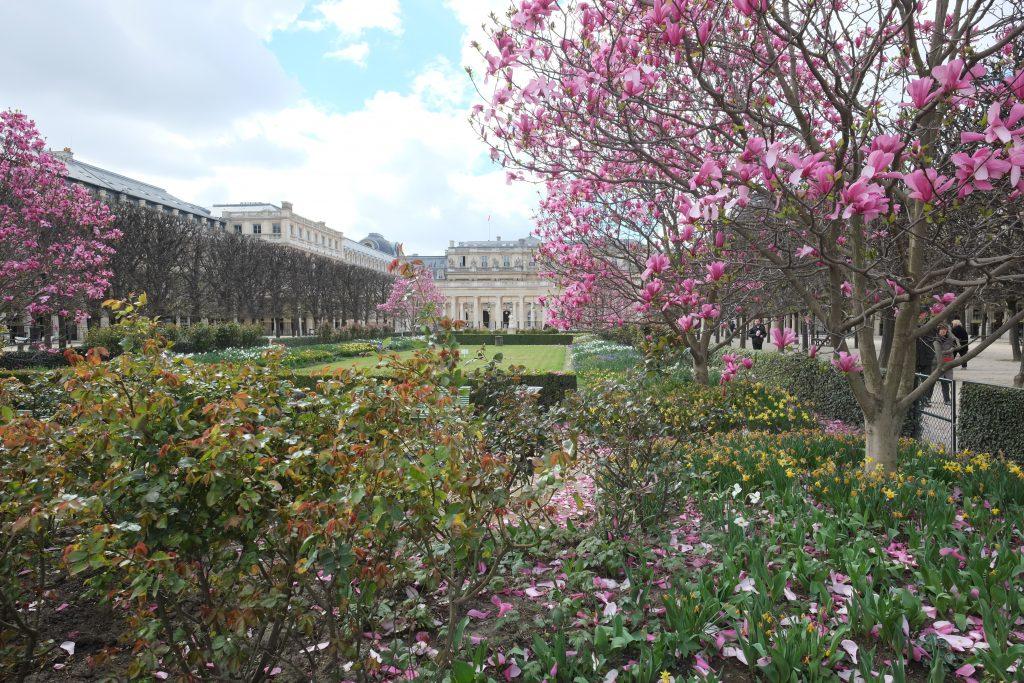 Les jardins du Palais Royal entrent dans le printemps