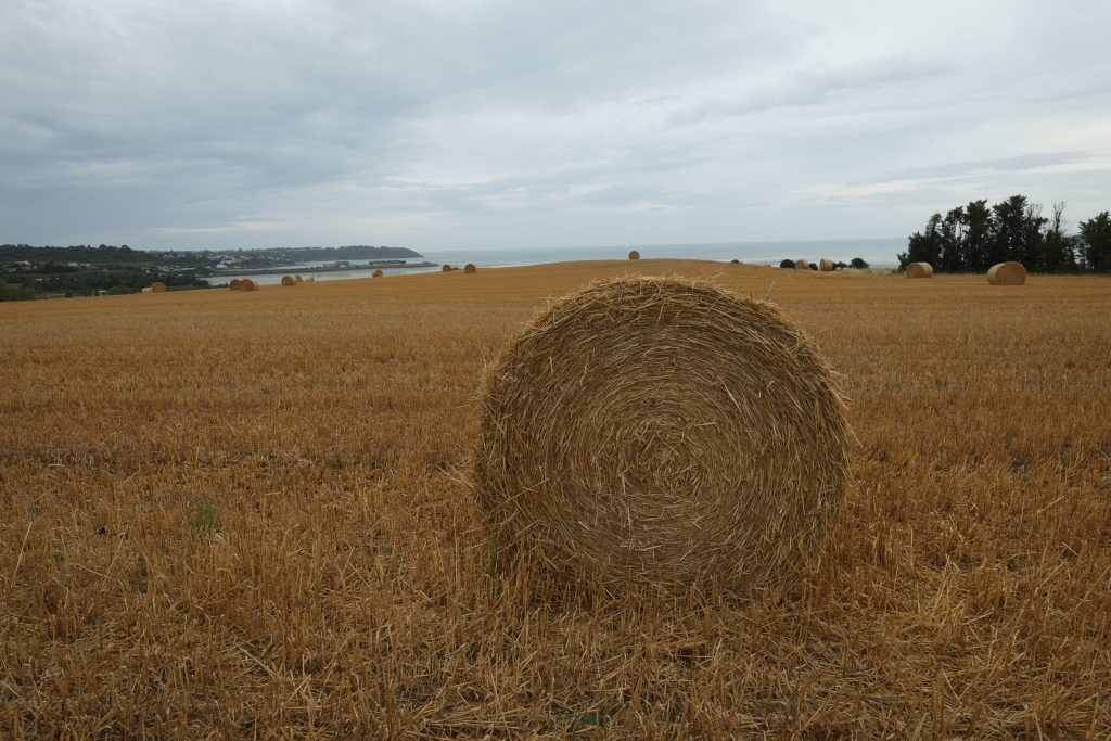Des champs fertiles face à la Manche