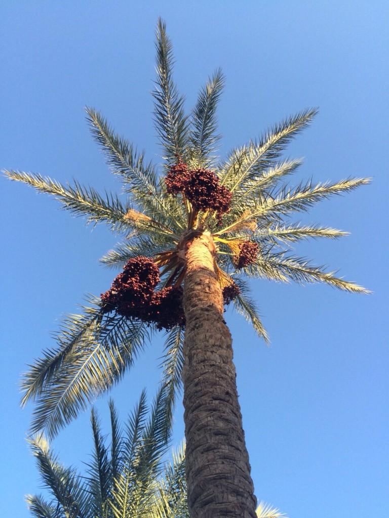 Sous les cocotiers de Charm El Cheikh