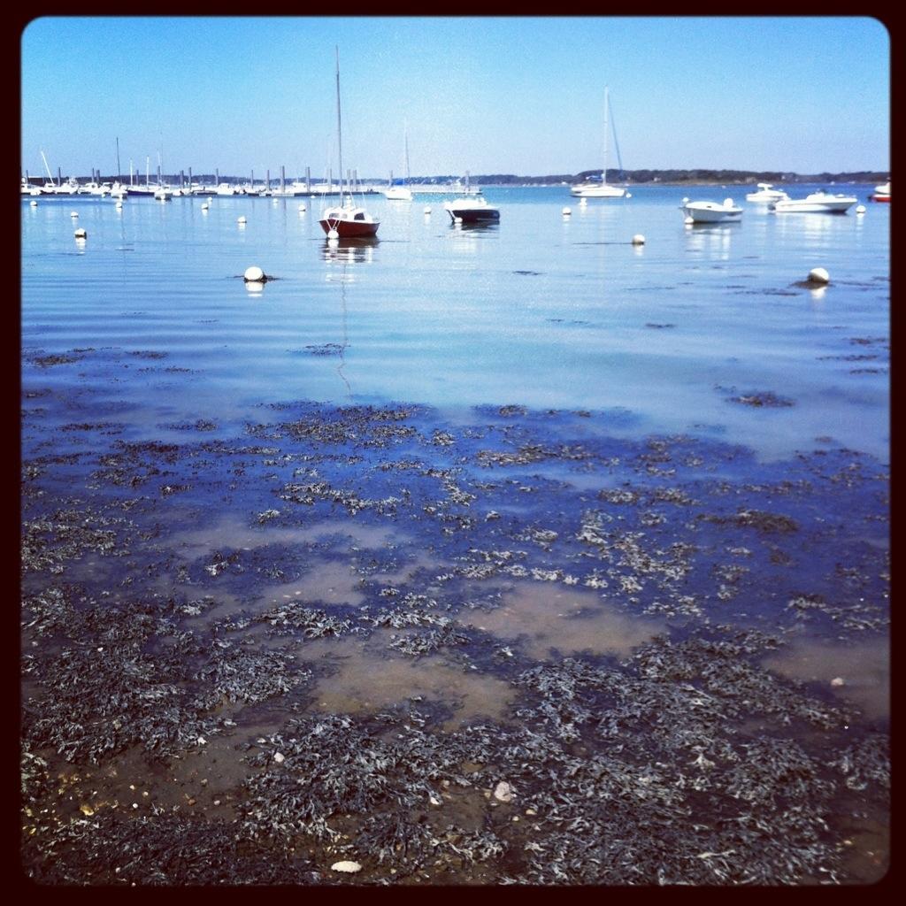 Le golfe du Morbihan est l'un des plus beaux endroits d'Europe