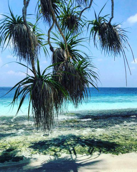Splendide nature sur l'Archipel de Maldives