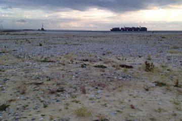 Un porte-conteneur rentre dans le port du Havre
