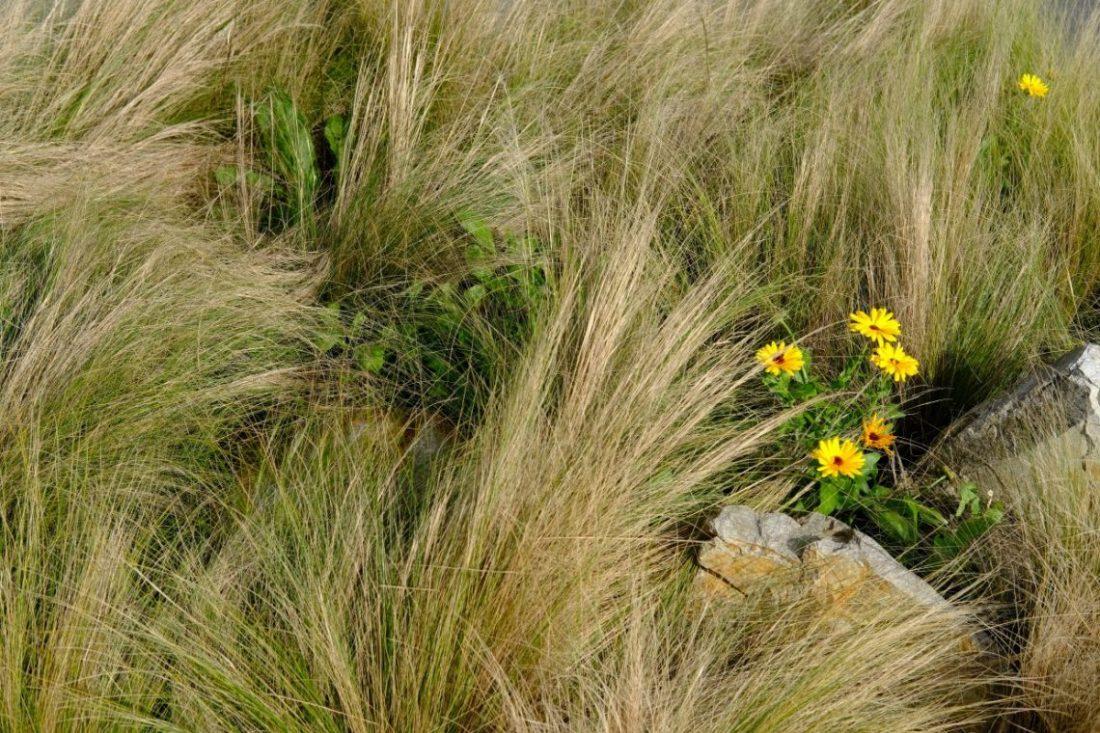 Les herbes folles au bord de la côte bretonne