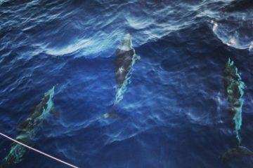 rencontre avec les dauphins au Nord de la Sicile