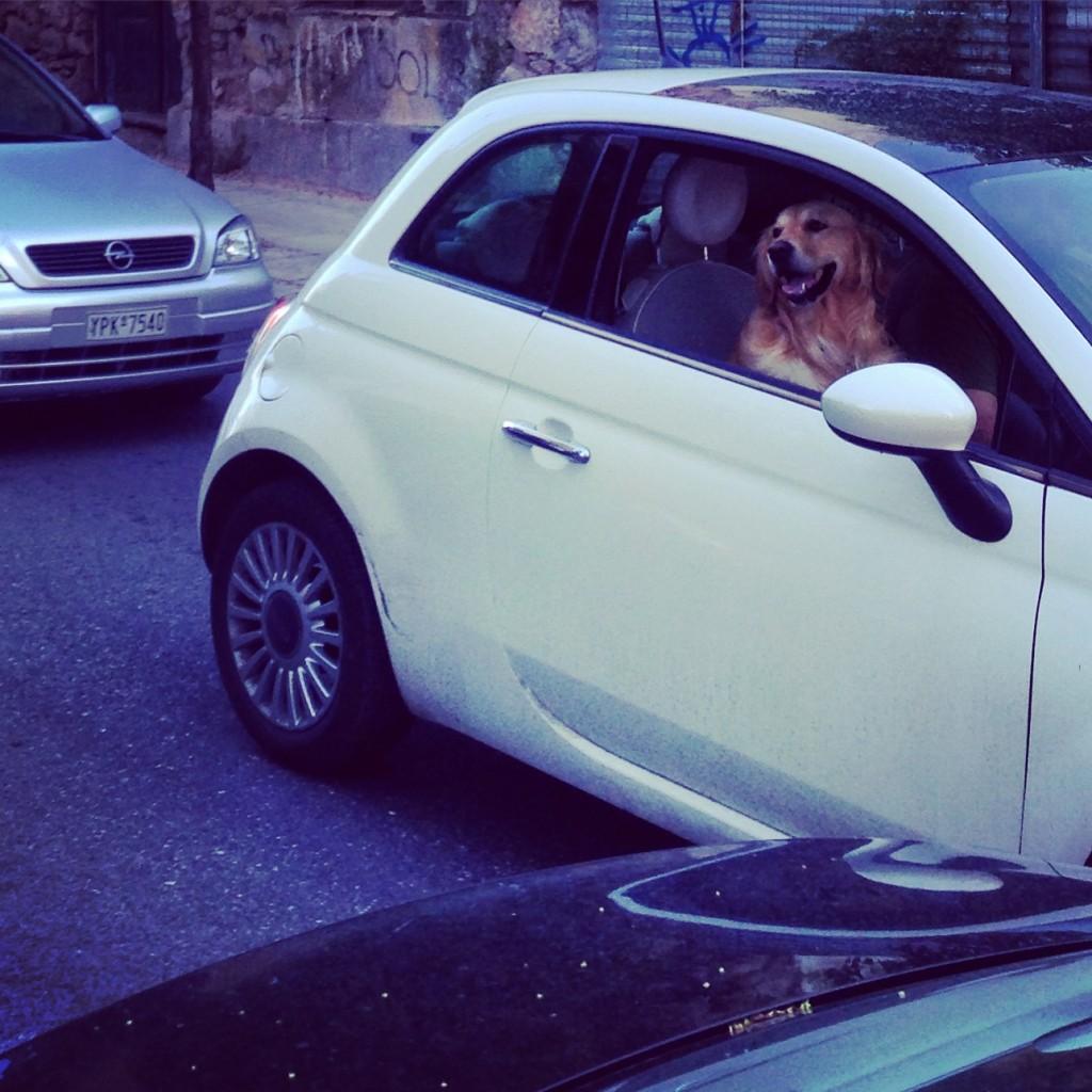 Un chien heureux malgré les embouteillages grecs