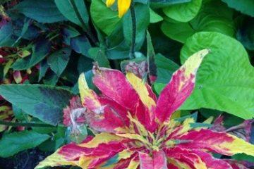 Zoom sur 2 fleurs du parc floral de vincennes