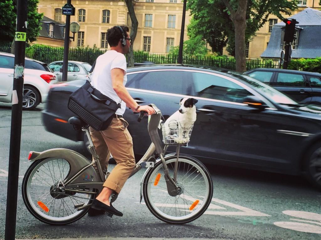 Un chien sur un vélib' à Paris
