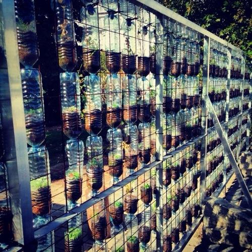 Des bouteilles en plastique servent à faire pousser des graines