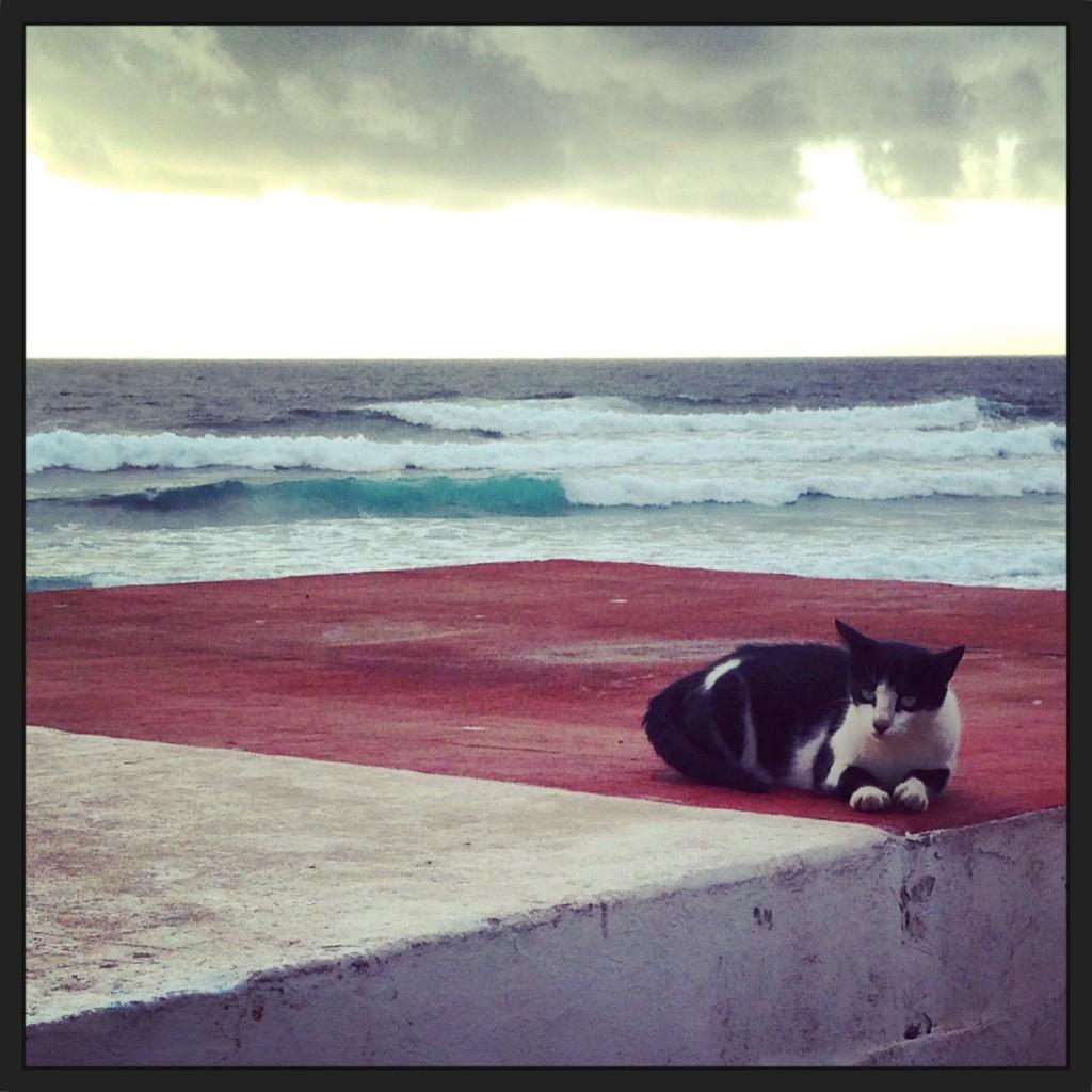 Oui les vaguent déroulent pas mal à Lanzarote