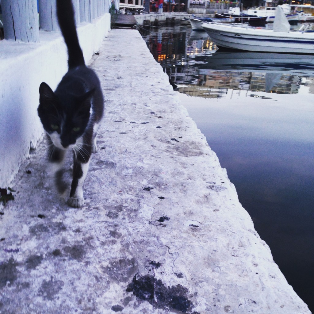 Un chat déambule sur un petit port du Pirée