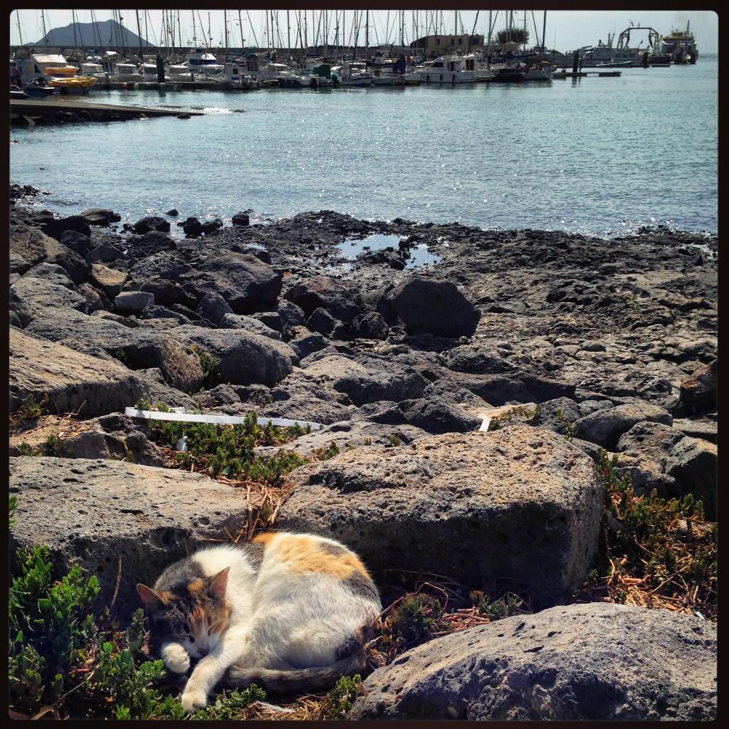 Un chat se repose en bord de mer à Corralejo, Archipel des Canaries